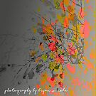 Fall Colors Unhinged No.02 by Bryan W. Cole