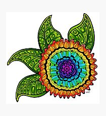 Bright & Colorful Flower  Photographic Print