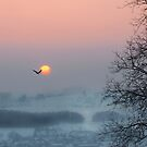Stillness by Rosy Kueng Photography
