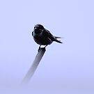 Swallow   by outsider