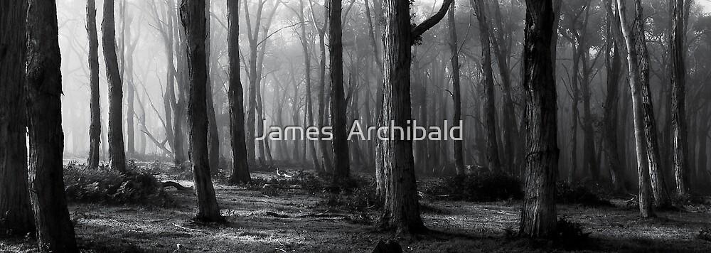 Australian bush morning  by James  Archibald