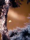 kanuka moon iteration 2 by dennis william gaylor