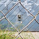 Leoland Gate by Nick Mattea
