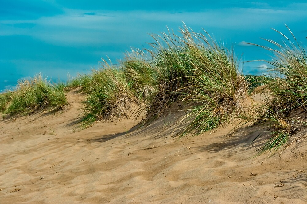 Sand and Grass by Enzwell