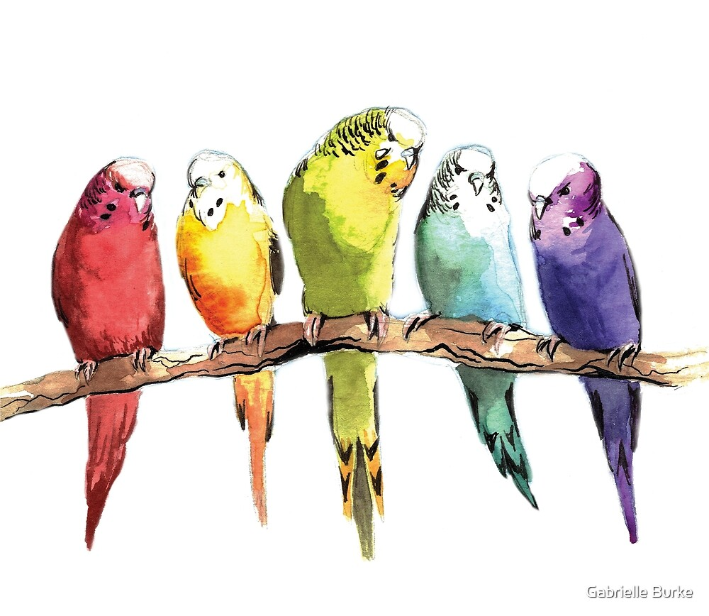 Rainbow Parakeets by Gabrielle Burke