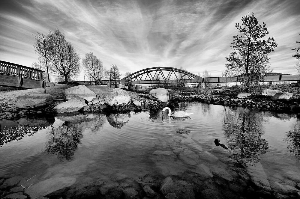 HDR Swan in black&white by geirkristiansen