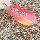 Fall leaf by treavorart