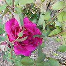 rose by treavorart