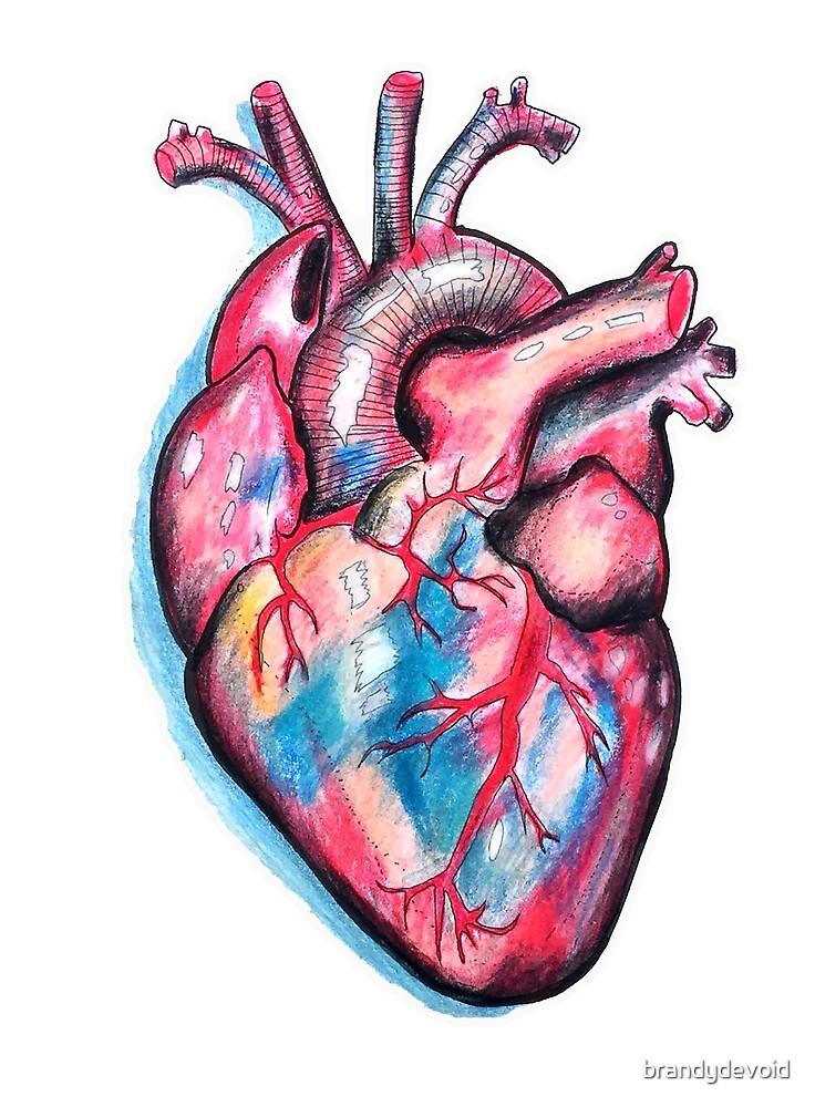 Anatomic Heart by brandydevoid