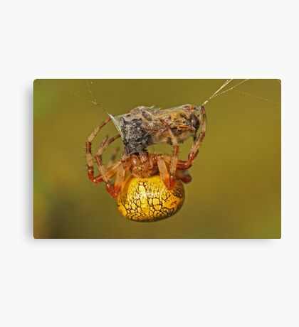 Spider With Prey Canvas Print