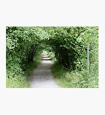 Tunnel of Leafy Green Photographic Print