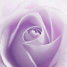 to see beauty by sabrina card