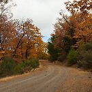 Fall Road Trip Photography Print by griffingphoto