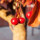 Red Berries Photography Print by griffingphoto