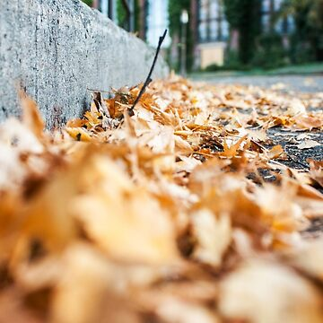 Fallen Leaves Photography Print by griffingphoto