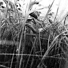 harvest by Julia  Kovtunyak
