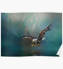 Eagle swooping for fish Poster