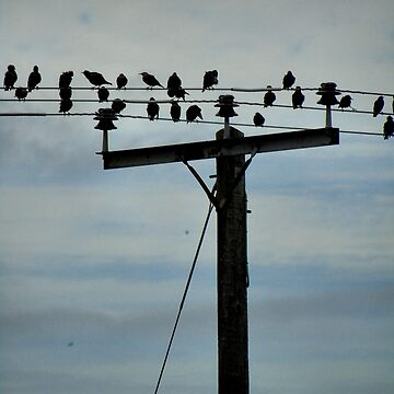 Flock of birds on a wire by chihuahuashower
