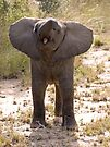 Baby Elephant Greeting by Michael  Moss