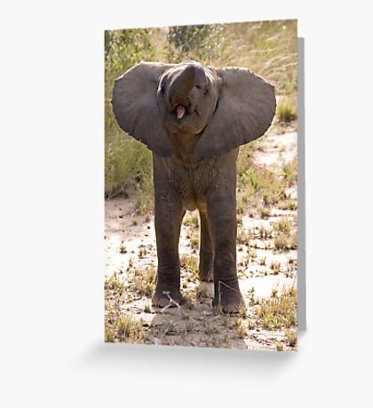 Baby Elephant Greeting Greeting Card