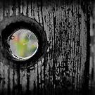 Seeking Reprieve Beyond the Cobwebs by Jen Waltmon