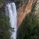 Fitzroy Falls by AmandaWitt