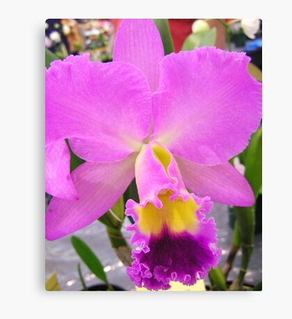 Orchid # 12 Canvas Print
