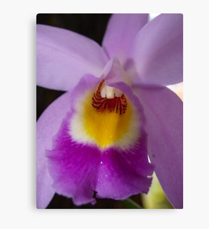 Orchid # 9 Canvas Print