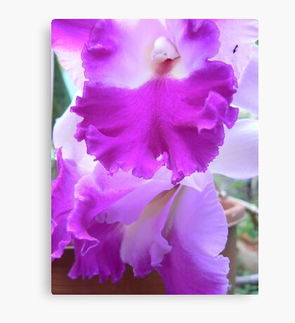 Orchid # 8 Canvas Print