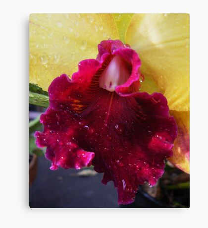 Orchid # 11 Canvas Print