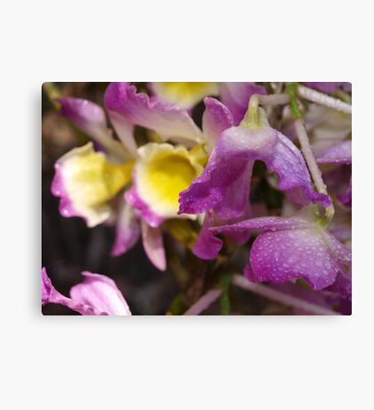 Orchid # 7 Canvas Print