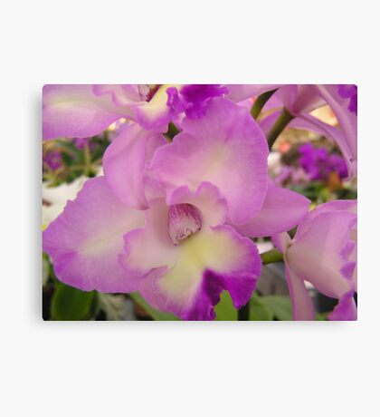 Orchid # 6 Canvas Print