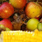 Wild  cute garden mouse by Simon-dell