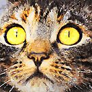 Yellow Cat Eyes by Leon Woods