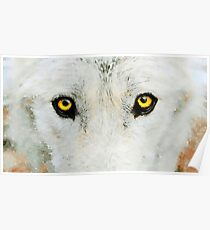 Yellow Wolf Eyes Poster