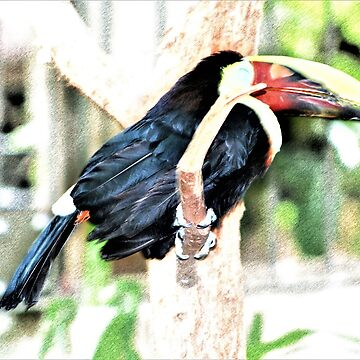 Birdie Nap Time by robspencer