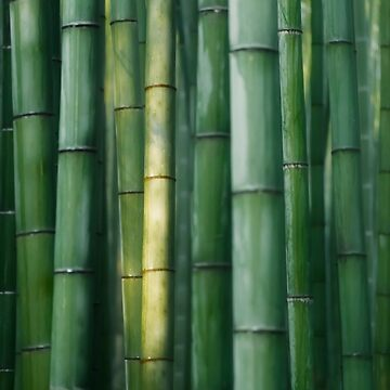 Arashiyama Bamboo forest abstract closeup background art photo print by AwenArtPrints