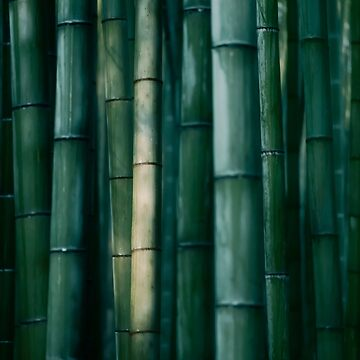 Bamboo forest dramatic abstract closeup background art photo print by AwenArtPrints