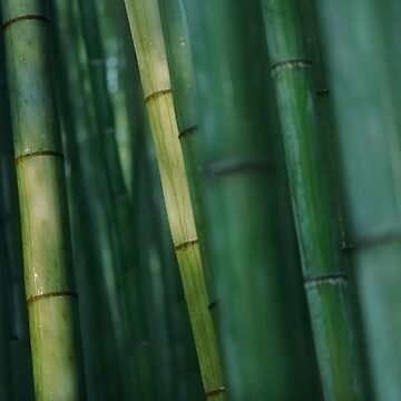 Bamboo forest in deep green colors dramatic abstract background art photo print by AwenArtPrints