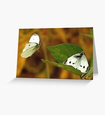 The Willingness of the Great Southern White Butterfly Greeting Card