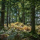 1st Signs of Autumn by mikebov
