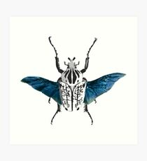Goliath Beetle in flight Art Print