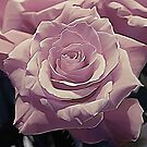 A Rose.... by Patriciakb