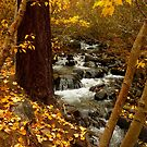 Autumn Foliage at Galena Creek by Elaine Bawden