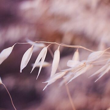 Tiny White Leaves Photography Print by griffingphoto