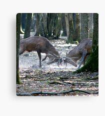Red deers fighting Canvas Print