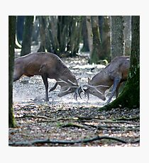 Red deers fighting Photographic Print