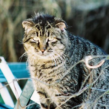 Punk Tomcat by Pagani