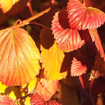 Autumn Leaves Photography Print by griffingphoto