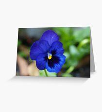 Violet for spring.  Greeting Card